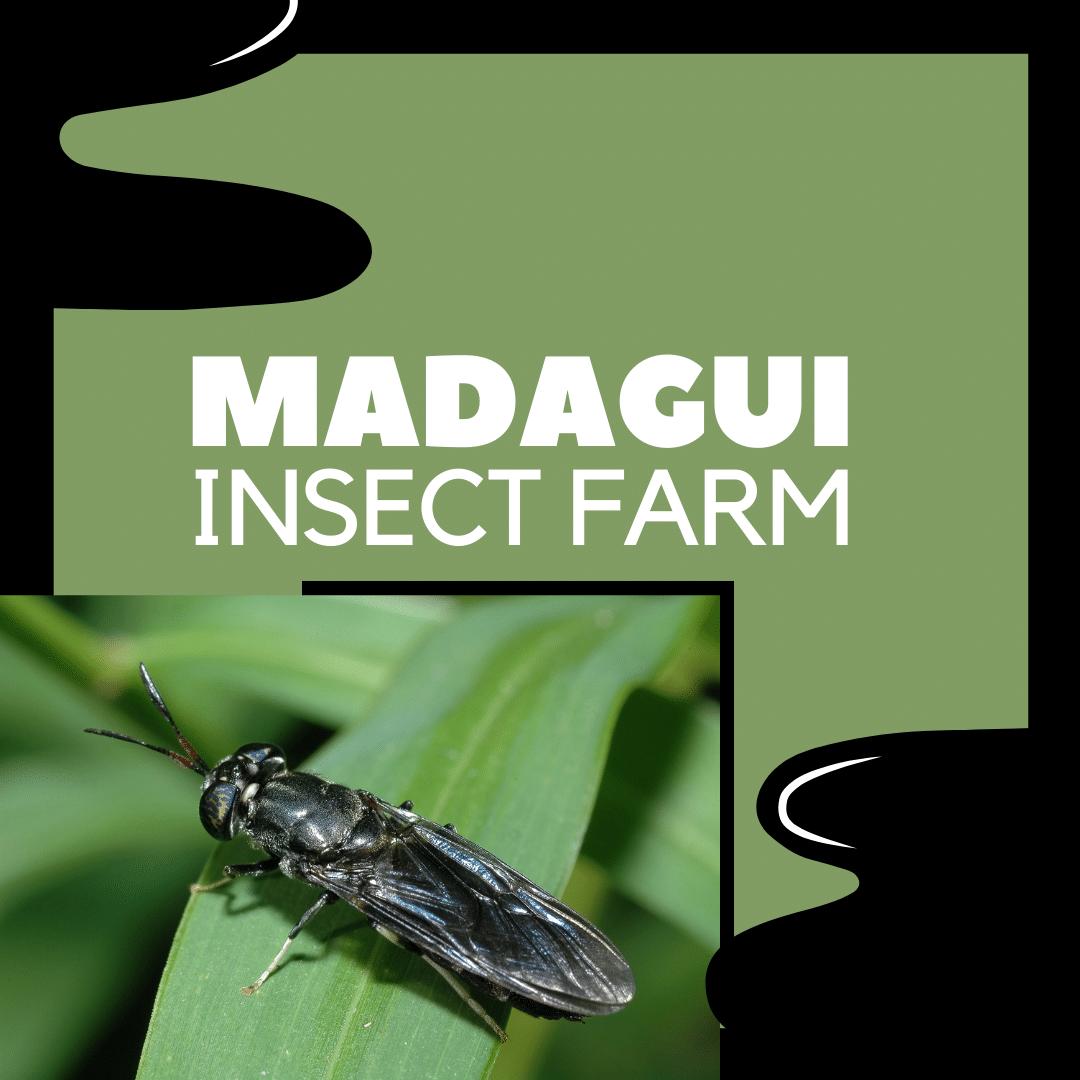 madagui insect farm